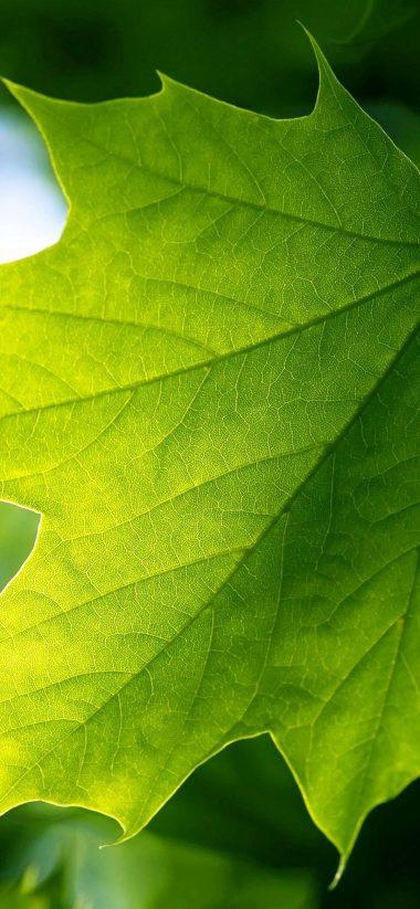 Green Leaf 1080x2340 380x823