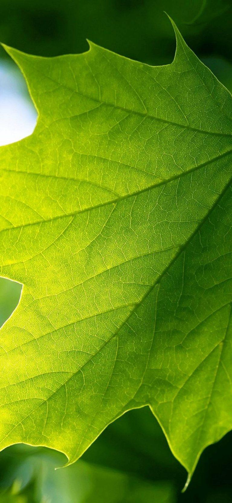 Green Leaf 1080x2340 768x1664