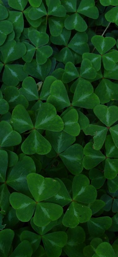 Green Leaf Clover 1080x2340 380x823