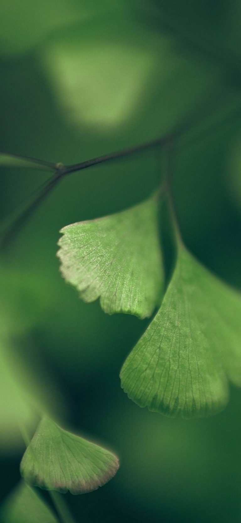 Green Nature Macro Ginkgo Foliage 1080x2340 768x1664