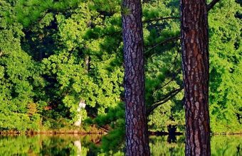 Green Trees Forest Lakes Reflections 1080x2340 340x220