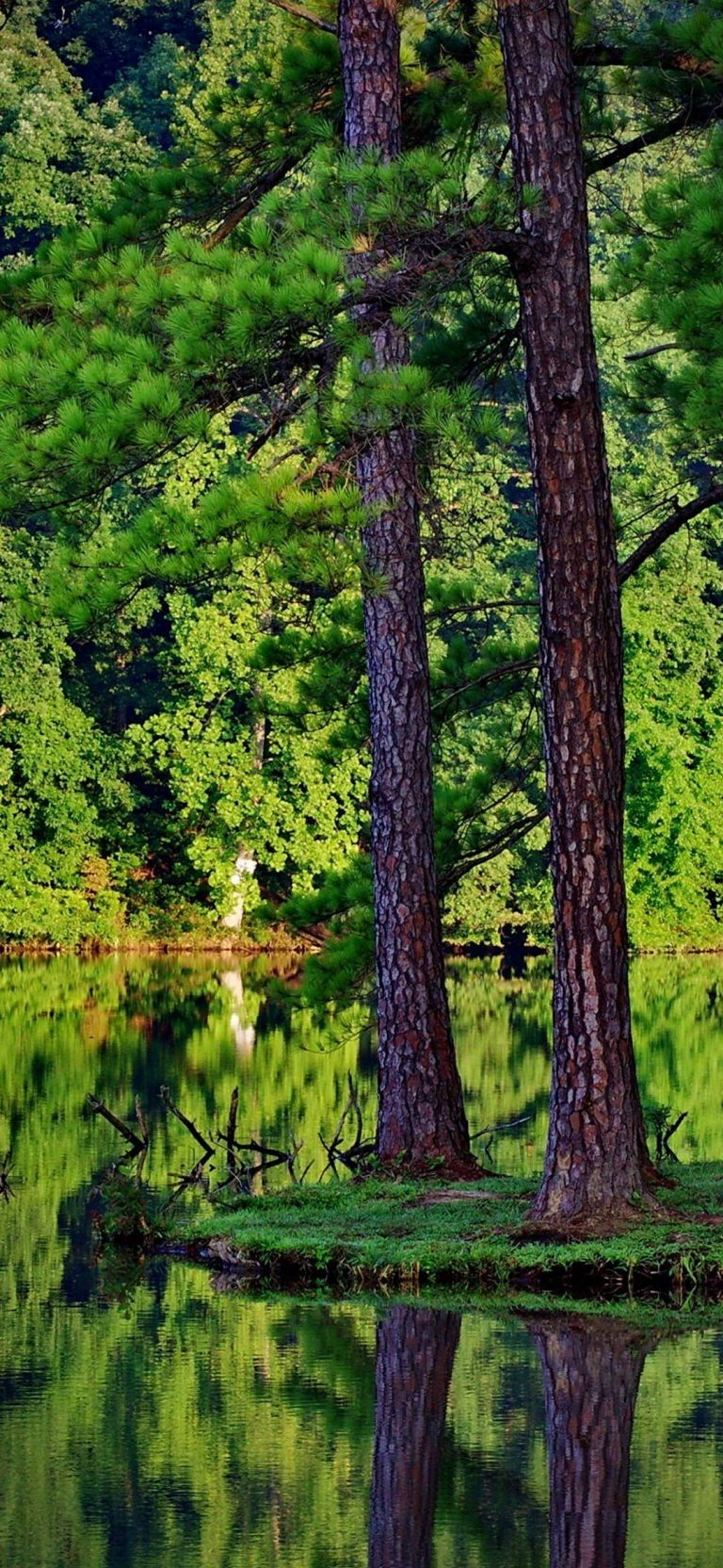 Green Trees Forest Lakes Reflections 1080x2340 768x1664