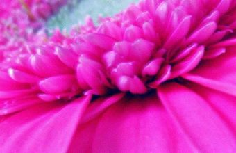 Hot Pink Flower 1080x2340 340x220