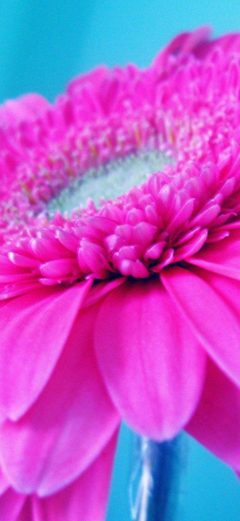 Hot Pink Flower 1080x2340 768x1664