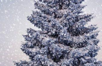 King Tree In Winter 1080x2340 340x220