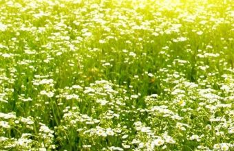 Light Field Grass 1080x2340 340x220