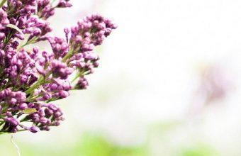Lilac Branch Spring 1080x2340 340x220