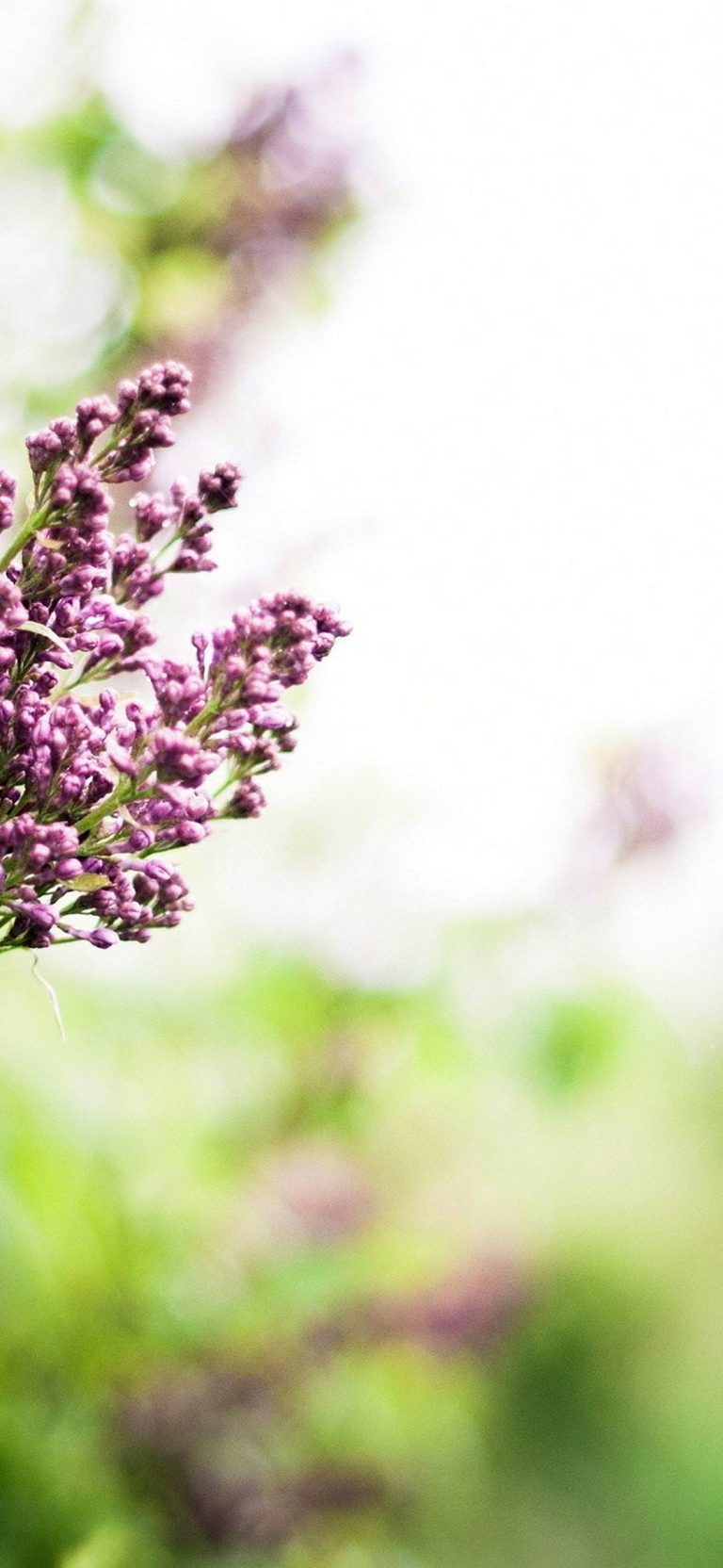 Lilac Branch Spring 1080x2340 768x1664