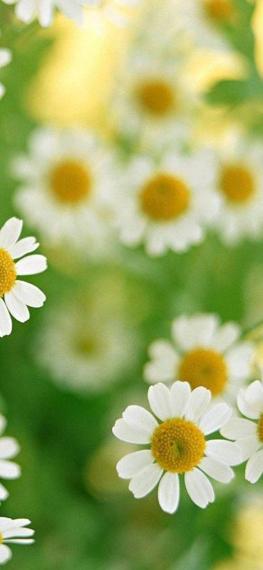 Many White Flowers 1080x2340 380x823