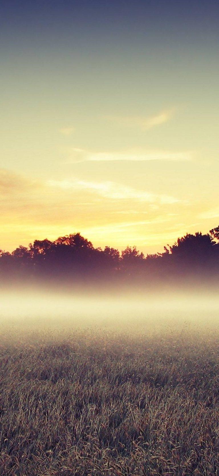 Morning Mist 1080x2340 768x1664