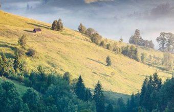 Mountains Grass Trees 1080x2340 340x220