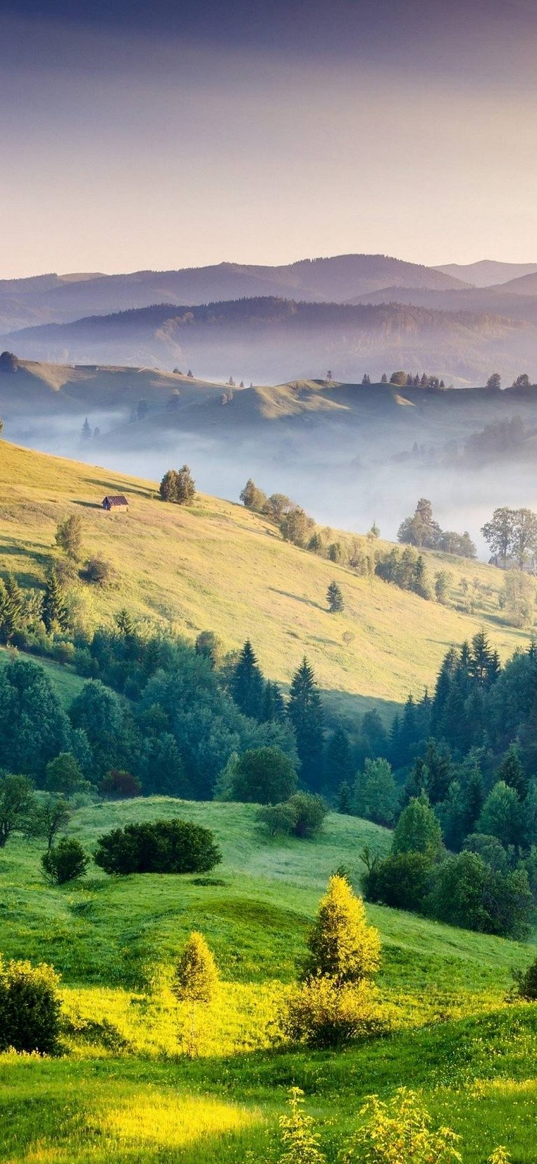 Mountains Grass Trees 1080x2340 768x1664