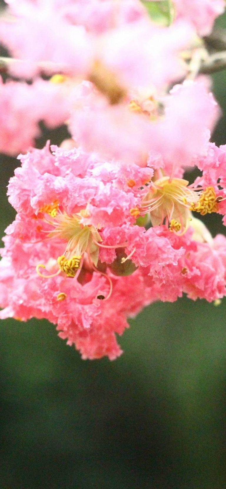Natural Beauty Of A Flower Wallpaper 1080x2340 768x1664