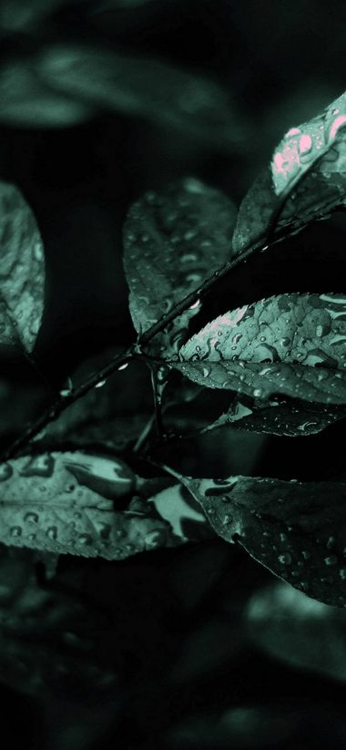 Nature Dark Leaves Macro Depth 1080x2340 380x823