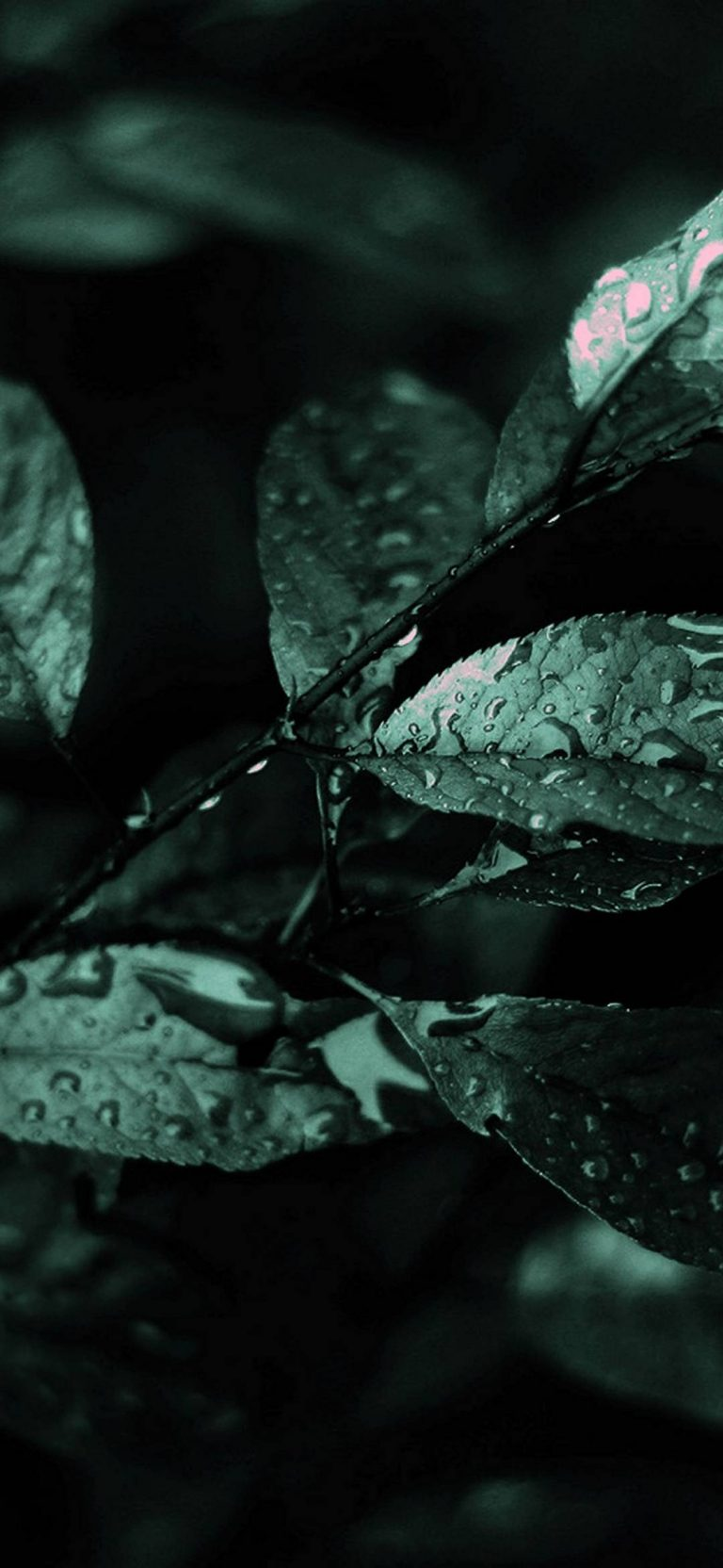 Nature Dark Leaves Macro Depth 1080x2340