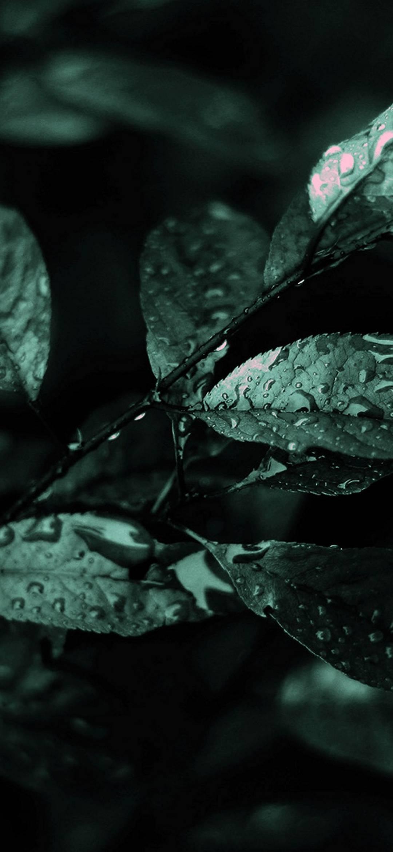 Nature Dark Leaves Macro Depth 1080x2340