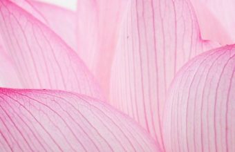Nature Flower Garden Love Pink Lily Lotus 1080x2340 340x220