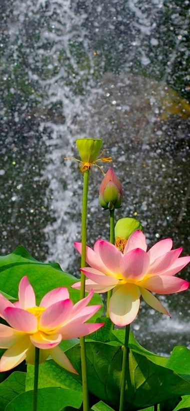 Nature Flower Garden Wild Pink Hd 1080x2340 380x823