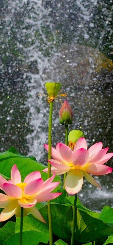 Nature Flower Garden Wild Pink Hd 1080x2340 380x823