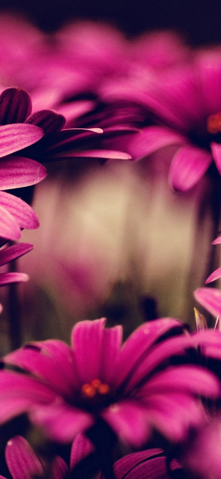 Nature Flowers Pink 1080x2340 768x1664