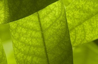 Nature Leaves Digital Art Macro 1080x2340 340x220