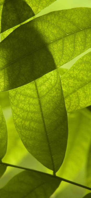 Nature Leaves Digital Art Macro 1080x2340 380x823