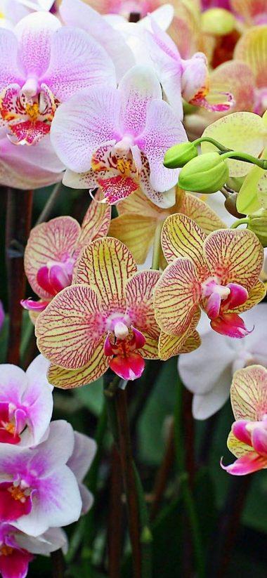 Orchids Flowers Petals 1080x2340 380x823