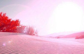 Pink Desert 1080x2340 340x220