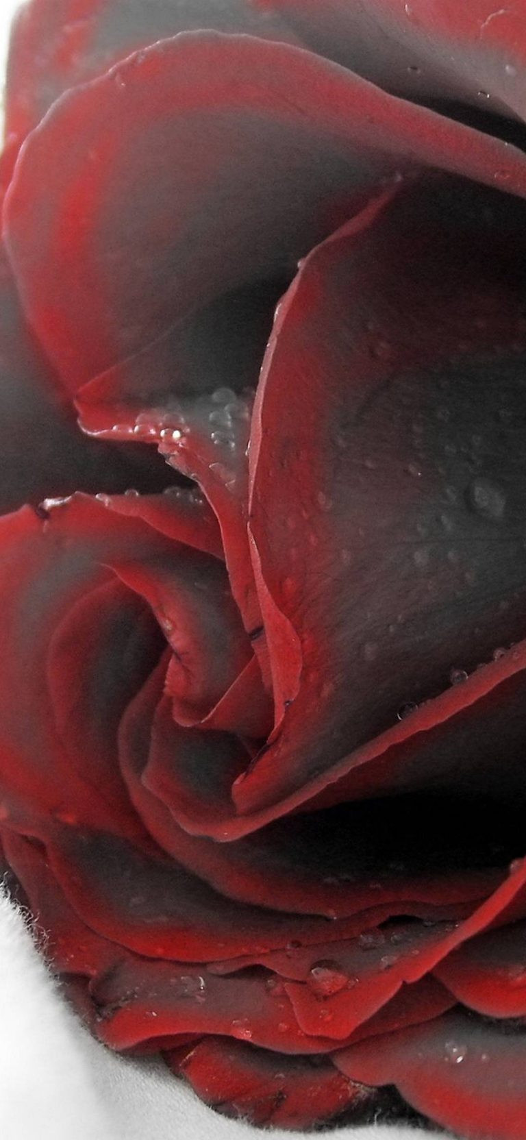 Red Black Rose 1080x2340 768x1664