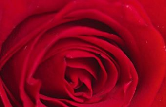 Red Rose Alone 1080x2340 340x220