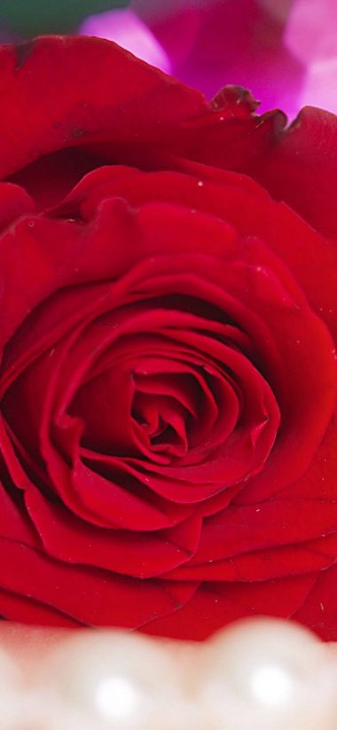 Red Rose Alone 1080x2340 380x823