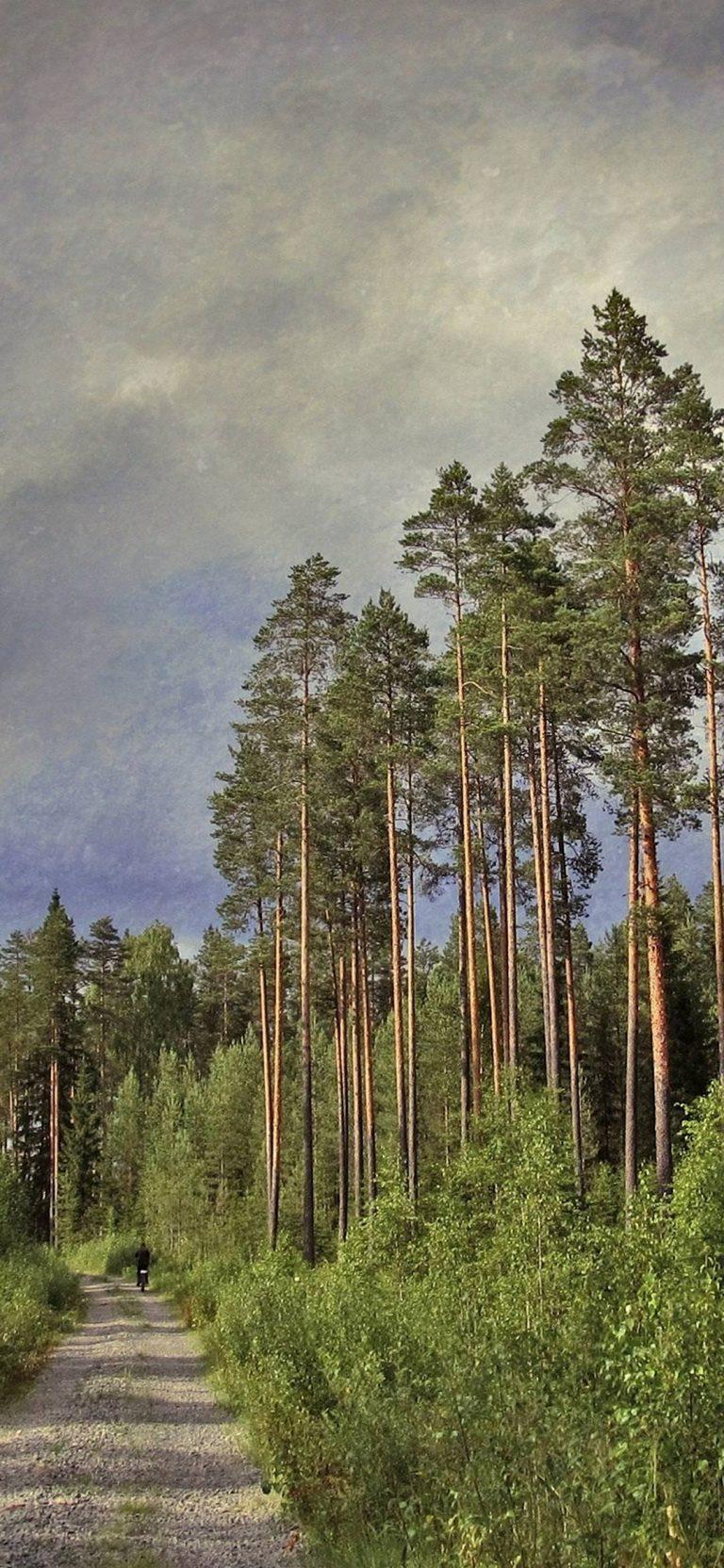Road Trees Pines 1080x2340 768x1664