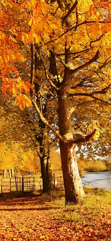 Scotland Autumn River Fall 1080x2340 380x823