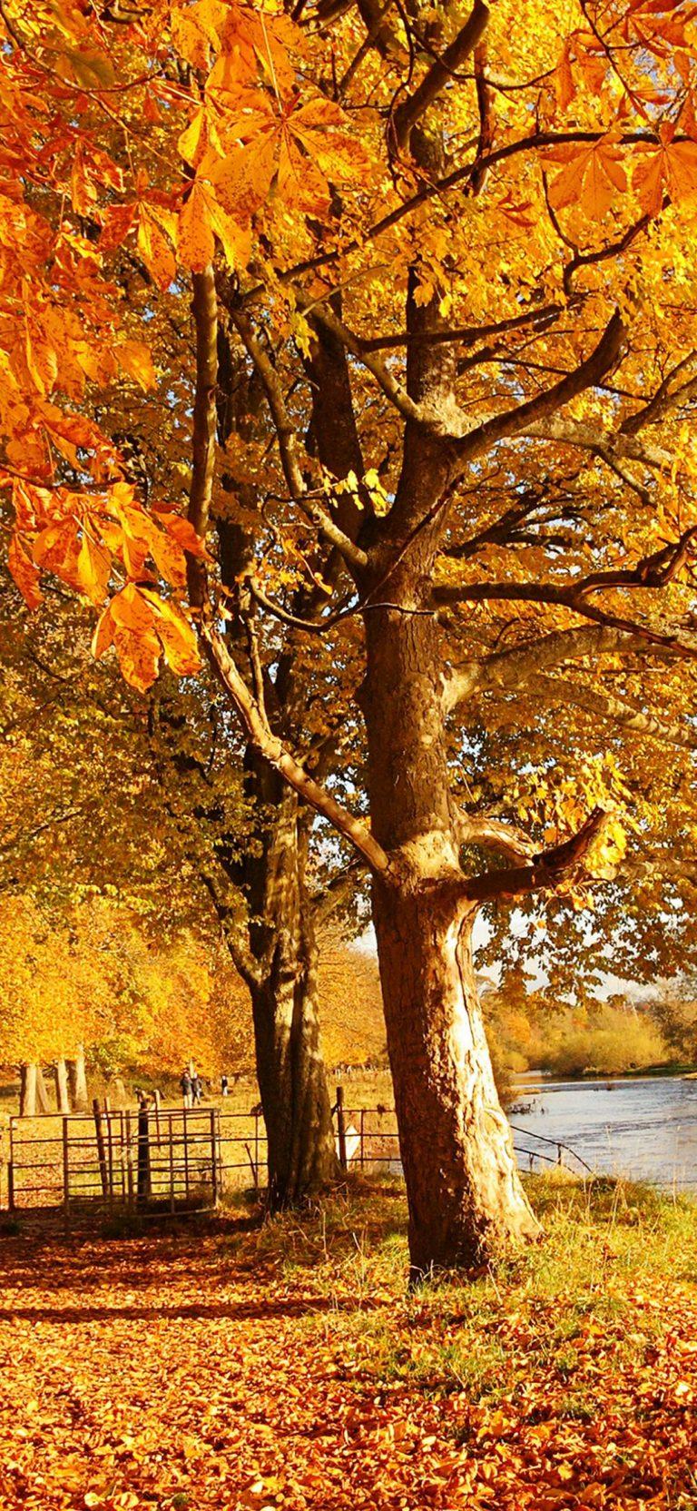Scotland Autumn River Fall 1080x2340 768x1664