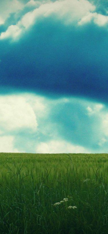 Sky Field Summer 1080x2340 380x823