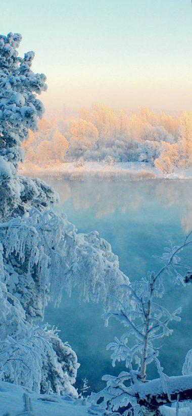 Snow Tree 1080x2340 380x823