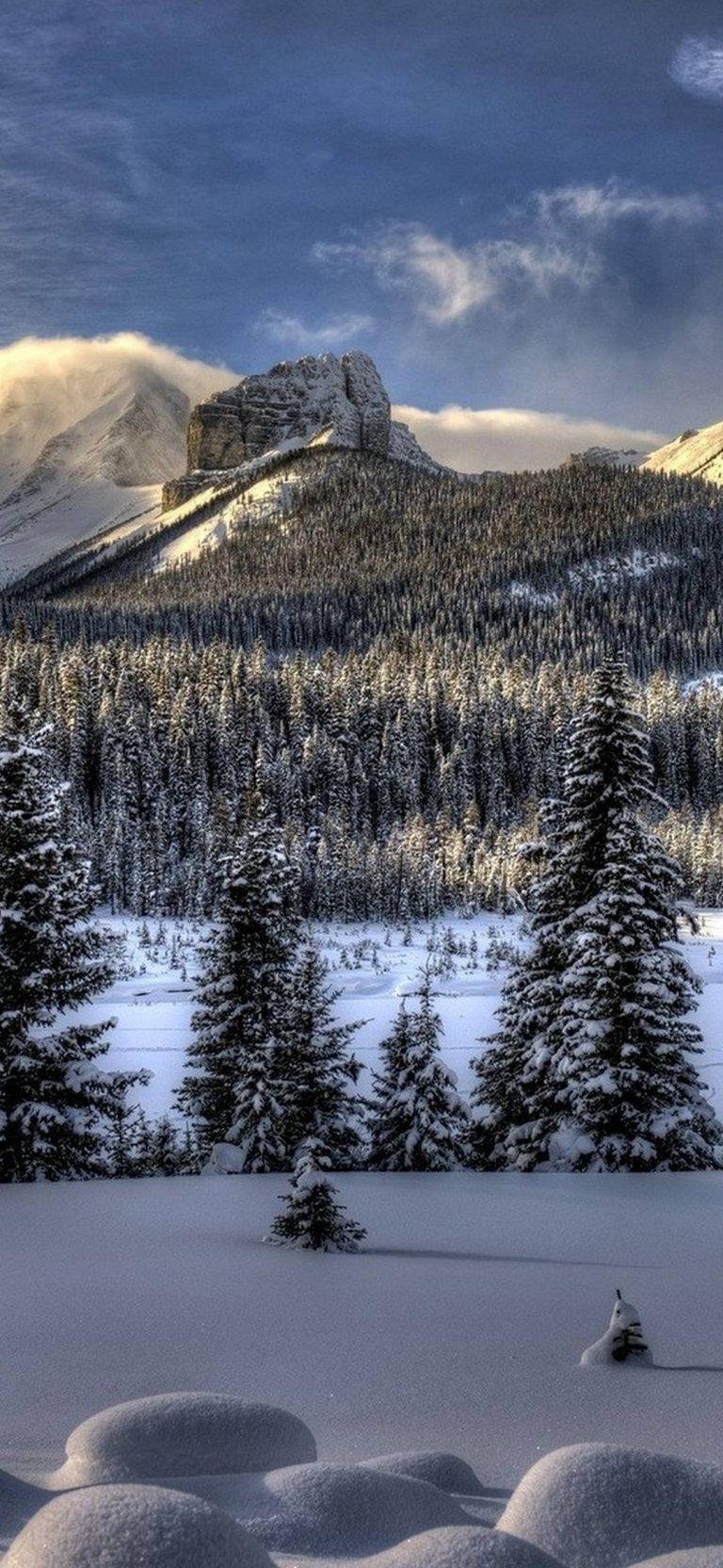 Snow Winter Trees 1080x2340 768x1664