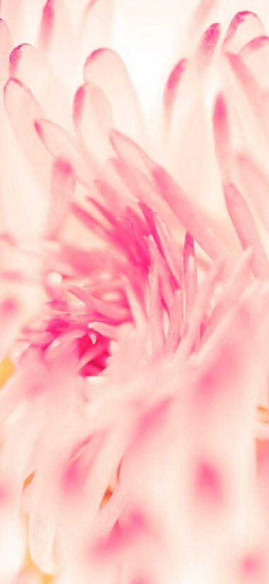 Spring Daisy Flower 1080x2340 380x823