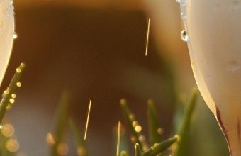 Spring Snowdrops Flowers 1080x2340 340x220