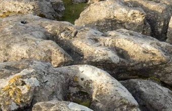 Stones Grass Sky 1080x2340 340x220