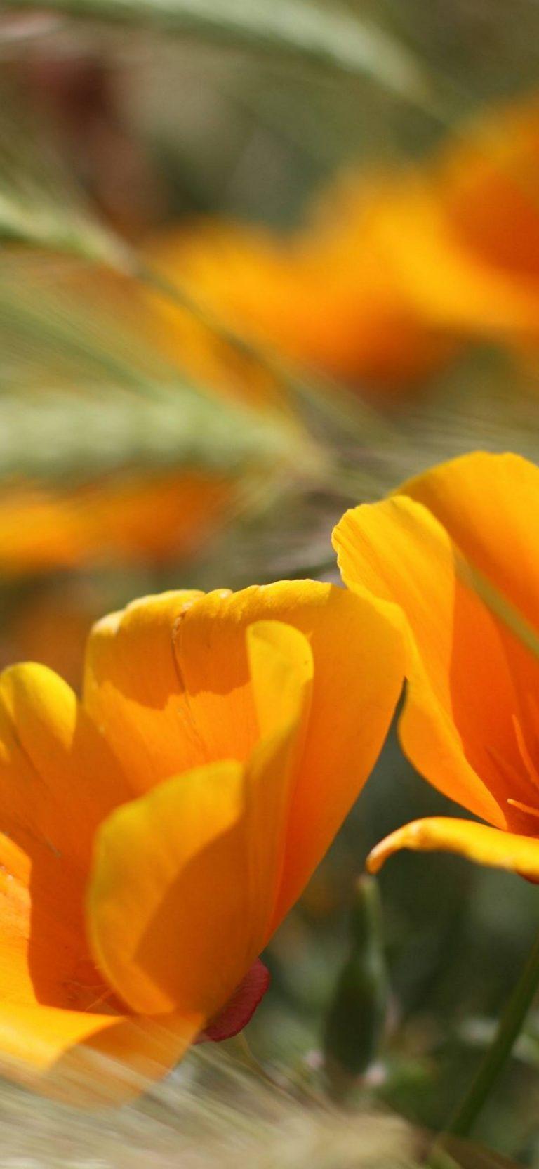 Summer Flowers 1080x2340 768x1664