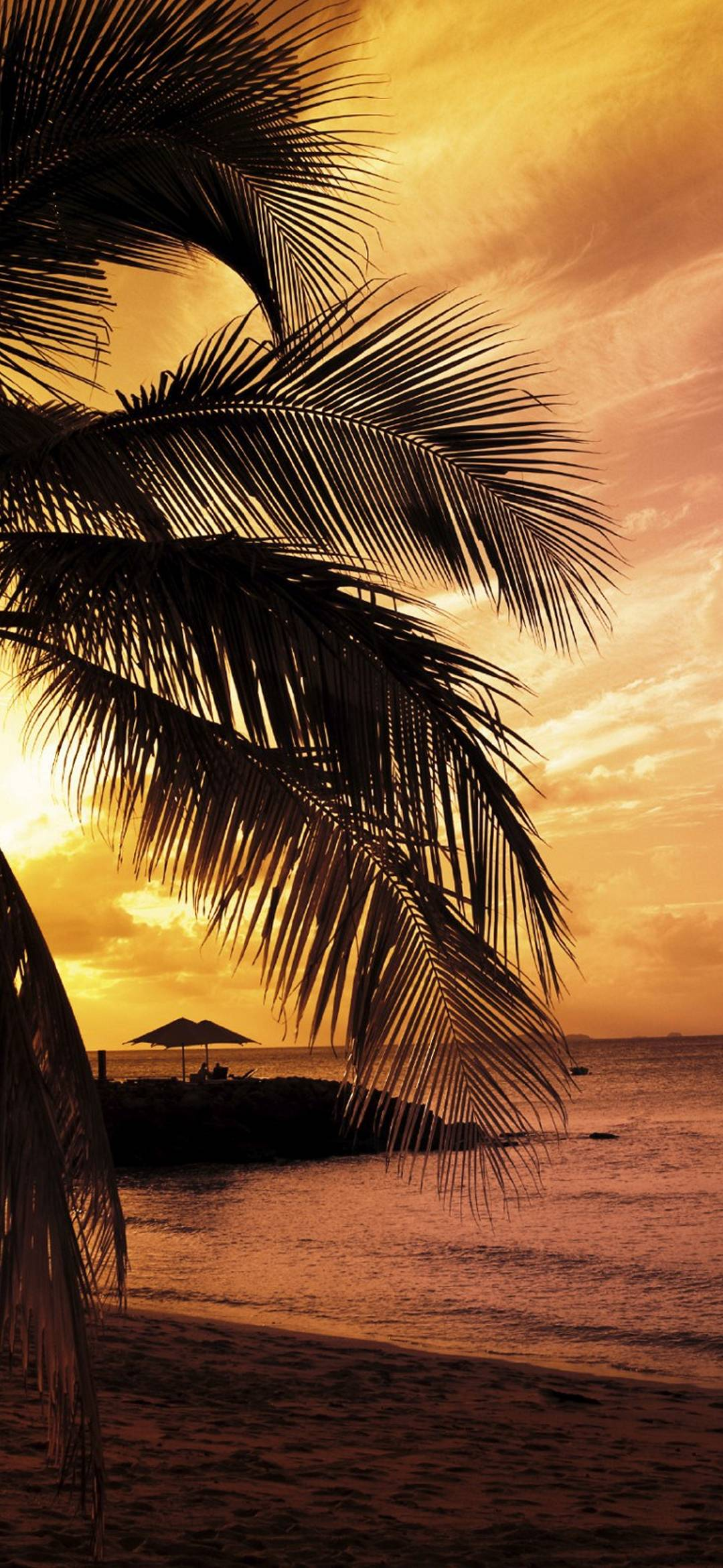 Sunset at the bay 1080x2340 - Palm tree wallpaper for android ...