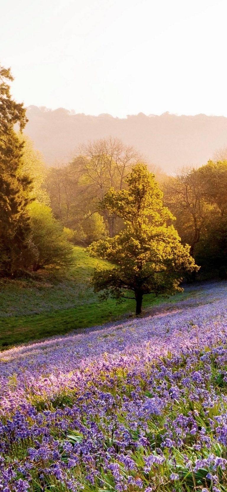 Sunset Landscapes Nature Flowers 1080x2340 768x1664
