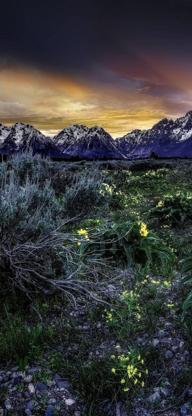 Sunset Mountains Field Flowers 1080x2340 380x823