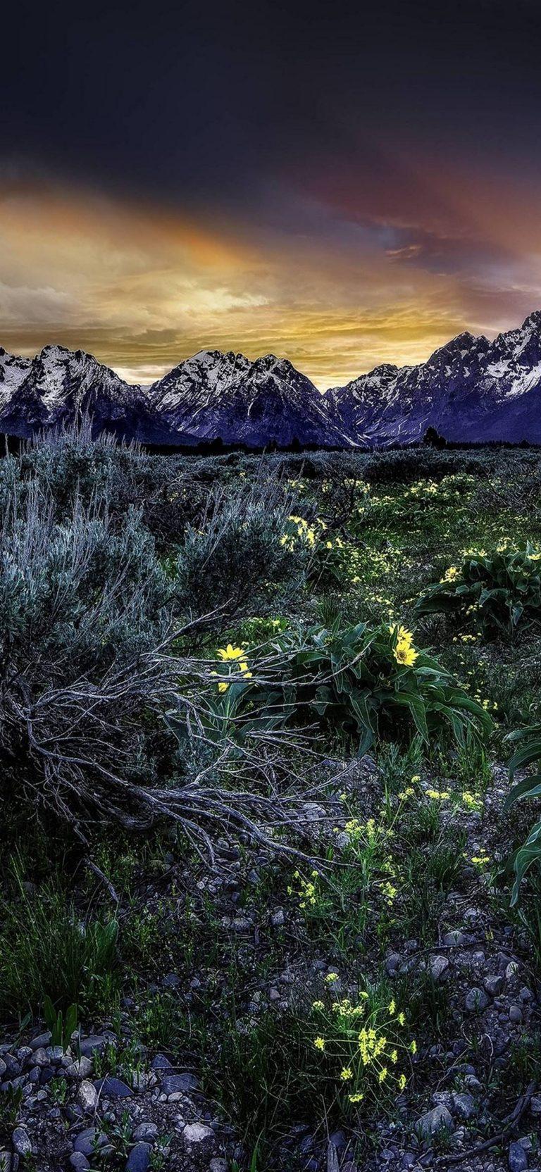 Sunset Mountains Field Flowers 1080x2340 768x1664