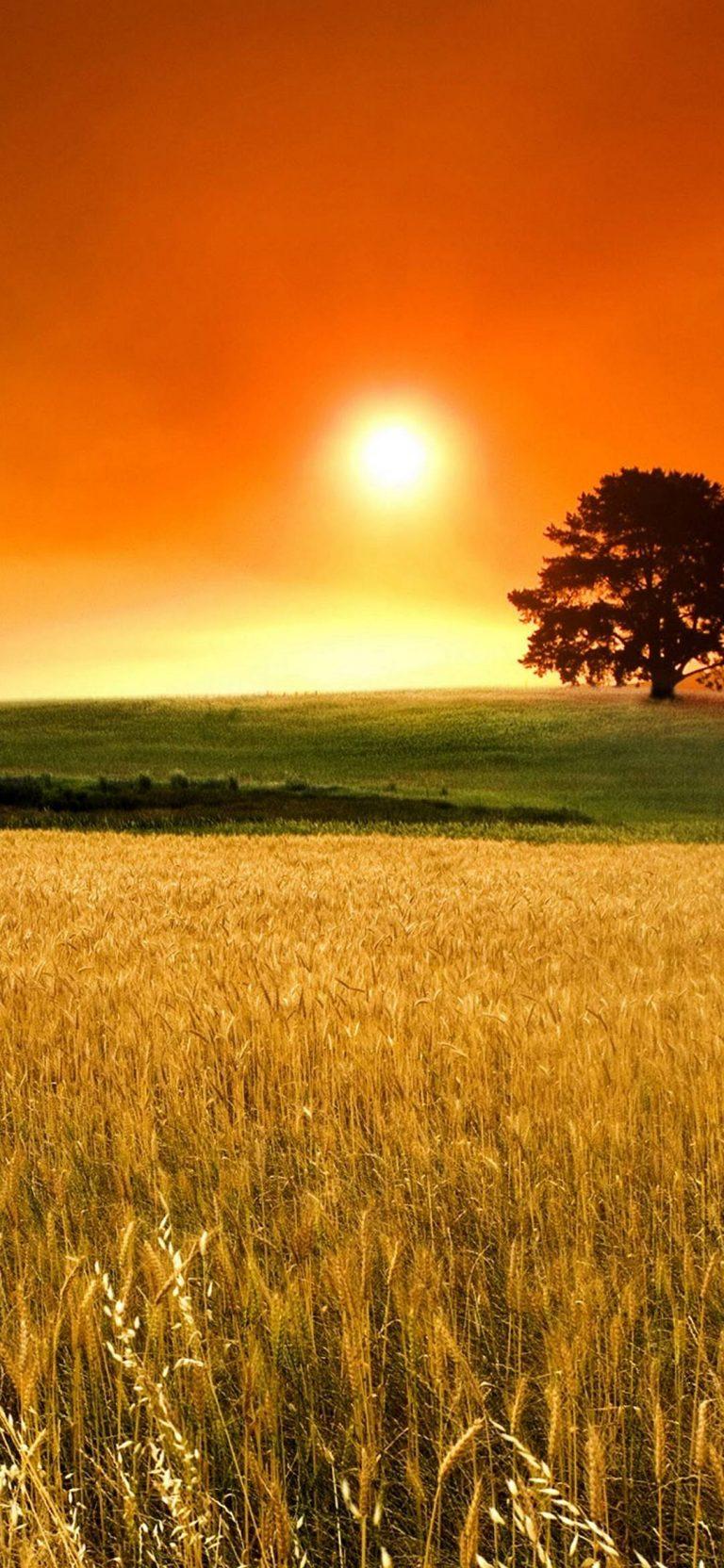 Sunset Nature Trees Autumn 1080x2340 768x1664