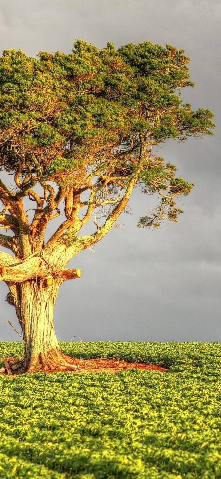 Tree Field Grass 1080x2340 768x1664