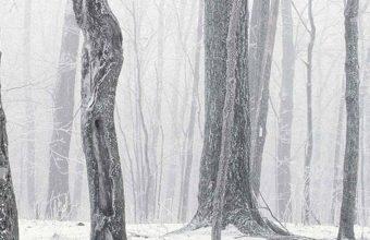 Trees Winter Snow 1080x2340 340x220