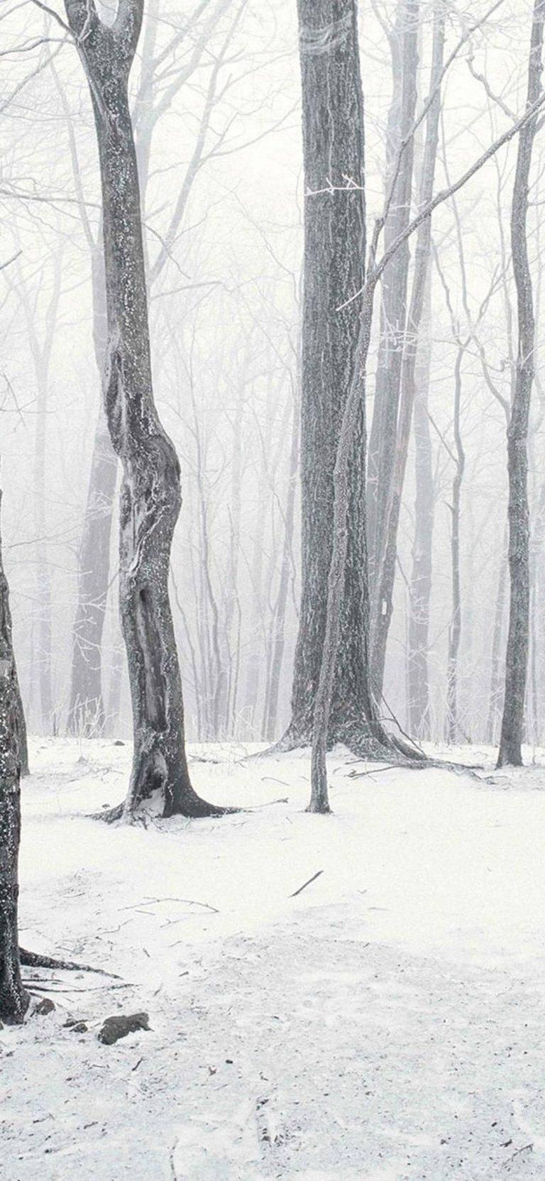 Trees Winter Snow 1080x2340 768x1664