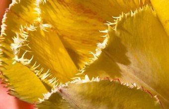 Tulip Petals Branch 1080x2340 340x220